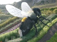 Bee (Eden Project)